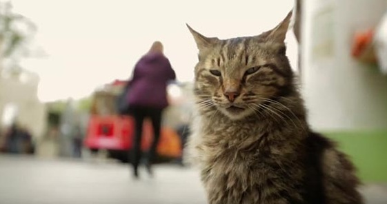 фильмы про котов