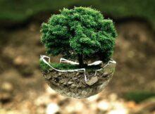 екологія ліс
