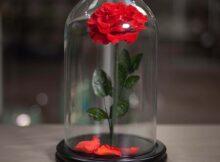 квіти в колбі