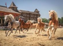 кони 20 разных пород